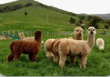 新西兰南北岛蒂卡波观星9日游推荐-精选新西兰中线库克山国家公园,蒂卡波湖,普卡基湖,瓦纳卡湖,箭镇,皇后镇,霍比特村q