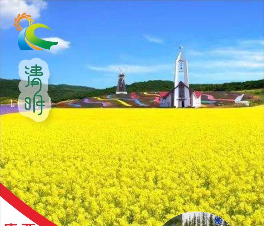 清明节周边旅游推荐-西海岸观光园油菜花,唐岛湾海滨公园一日游